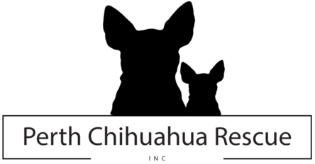 Perth Chihuahua Rescue Inc Providing A Better Life For Small Dogs